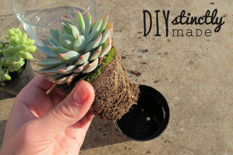 Effortless Succulents | DIYstinctlyMade.com