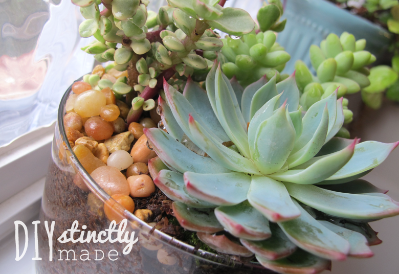 Effortless Succulents | DIYstinctlyMade.com